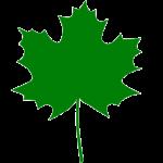 green_mapple_leaf