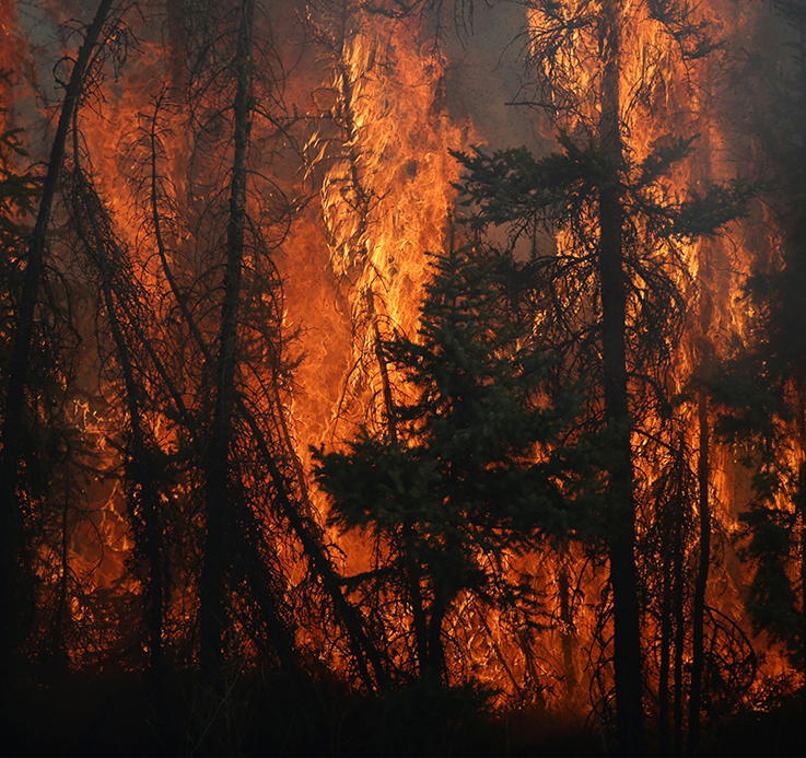 Wildfires will only get worse unless we learn how to live with them