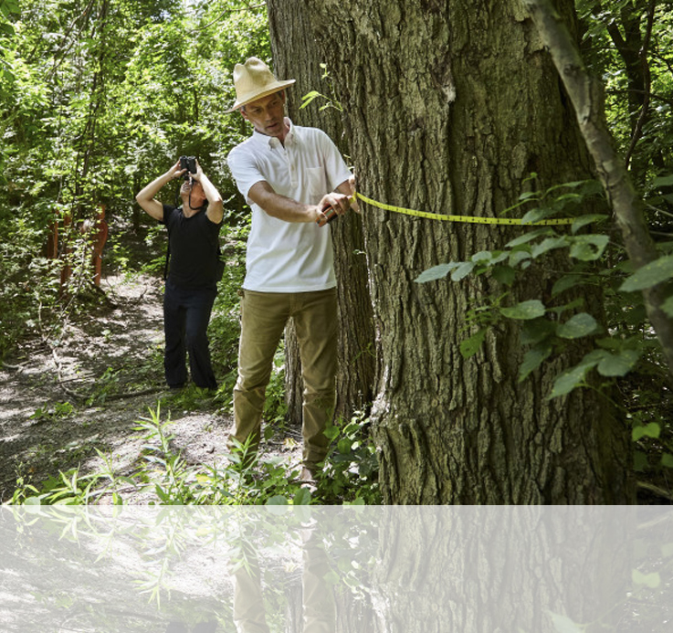 The fight to save Toronto's ravines from invasive species