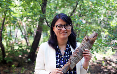 Using tree bark, U of T researcher develops new generation of sustainable products