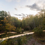 UofT News: A walk in the park? How spending time in nature can boost mental health