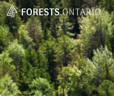 Forestry Alumni appointed to Forests Ontario's Board of Directors